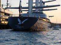Maltese Falcon in Falmouth